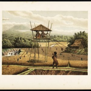 Antique Print of a Rice Field near Tempoeran (Java) by Perelaer (1888)