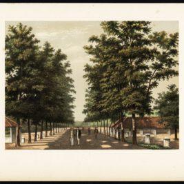 Antique Print of Avenue Paja Koembah by Perelaer (1888)