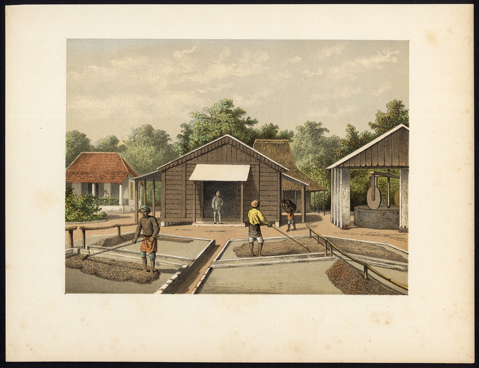 Antique Print of the Coffee Beans production on Sumatra by Perelaer (1888)
